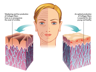 collagen process