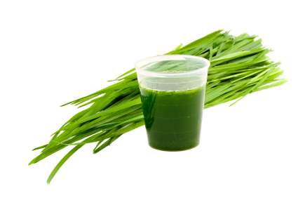 wheatgrass and drink